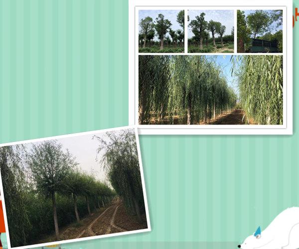 http://www.k2summit.cn/junshijunmi/1435511.html