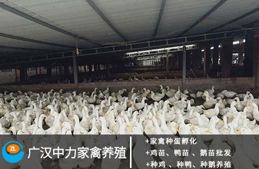 http://www.qwican.com/difangyaowen/2116148.html