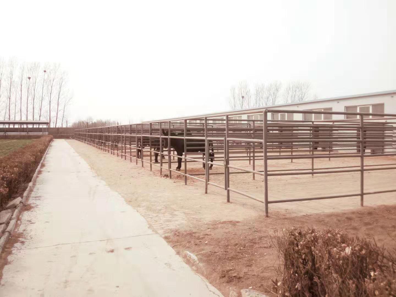 平利德州驴养殖场大型养驴场