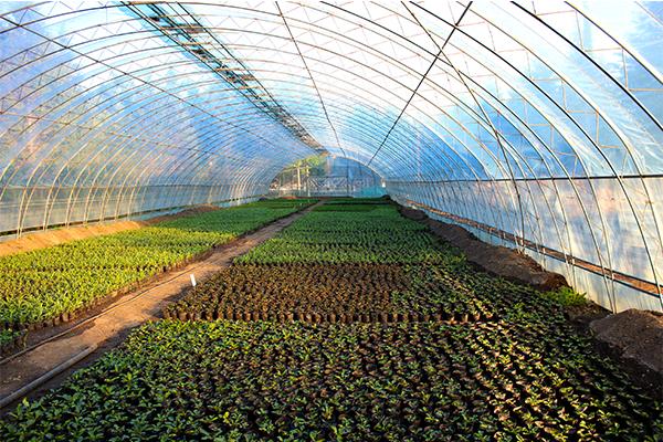 盐湖玉米水肥一体化哪家强