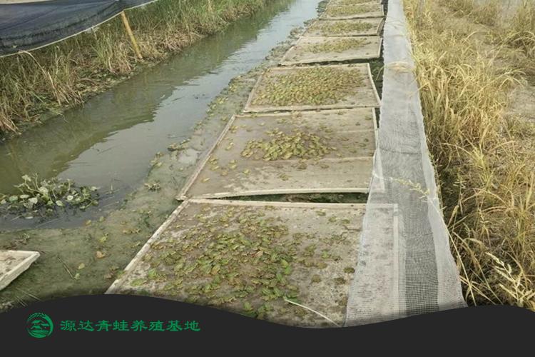 安徽省田鸡种苗基地有哪些?