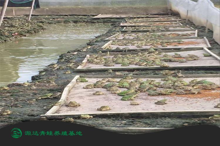 济南田鸡种苗基地培训地点