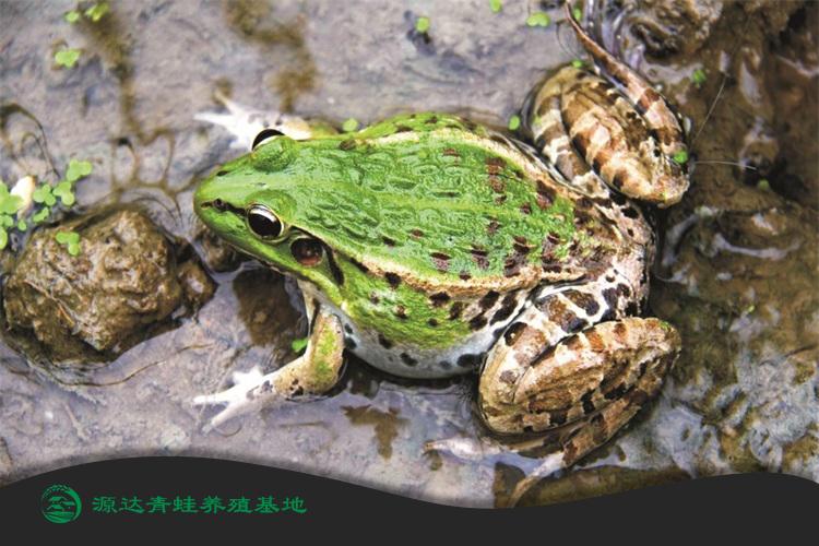 安徽省田鸡养殖中心联系电话