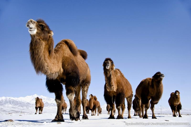 骆是动物界生成寿命较长的哺乳动物.