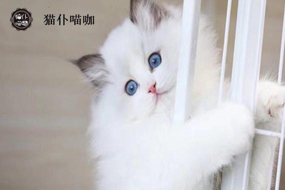 江苏新沂宠物猫公司售价