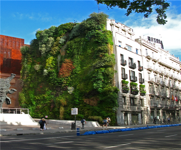 丹江口垂直绿化植物墙栽培方法