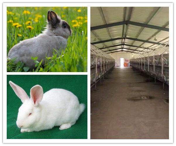 海安开办一家兔子养殖厂需要办理